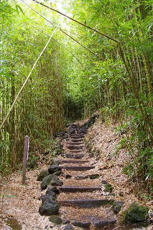 Hike Maui: the bamboo forest