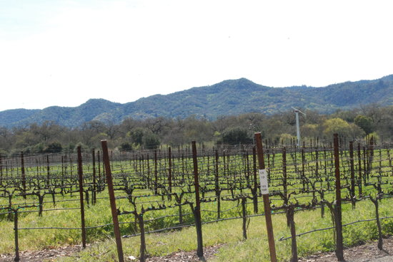 Goosecross Cellars : vineyards
