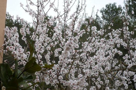 Ibiza Almendros en Flor mes de Febrero