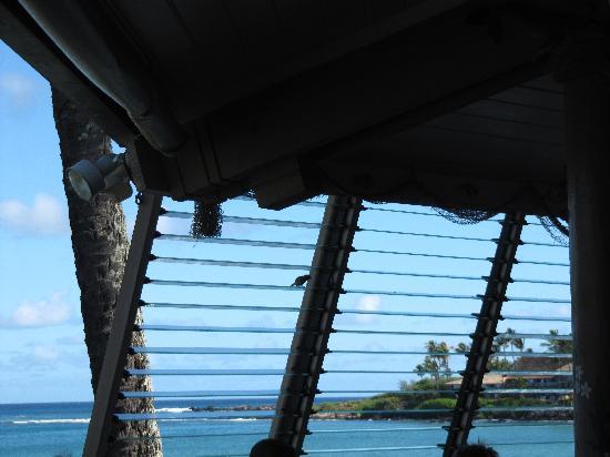 Gazebo Restaurant at Napili Shores: View while sitting inside.