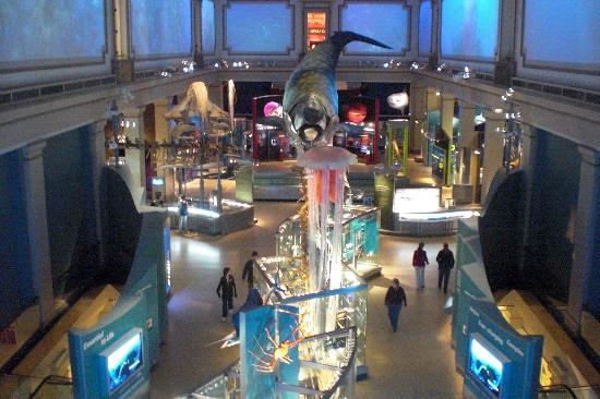 Smithsoniansk nasjonalmuseum for naturhistorie: an exhibit from above