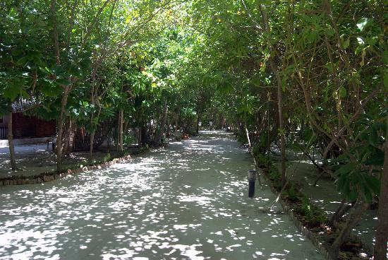 Medhufushi Island Resort: path from one end of the island to the other