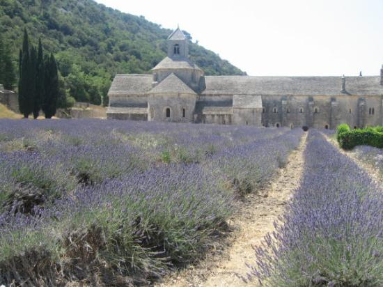 Aix-en-Provence, Frankrike: ทุ่งดอกลาเวนเดอร์ ชอบ เพราะหอมมากมาย