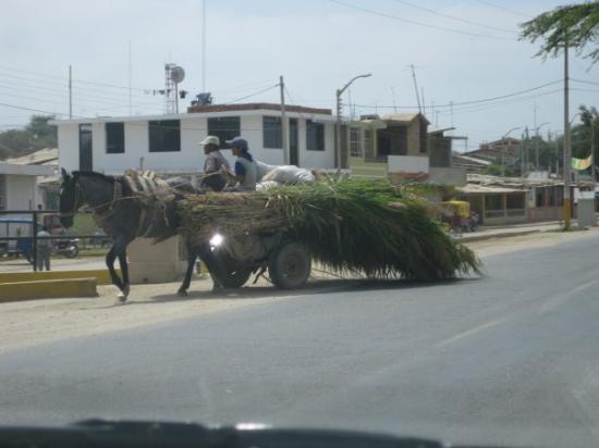 Talara, Peru: Lot's of horse and donkey carts.