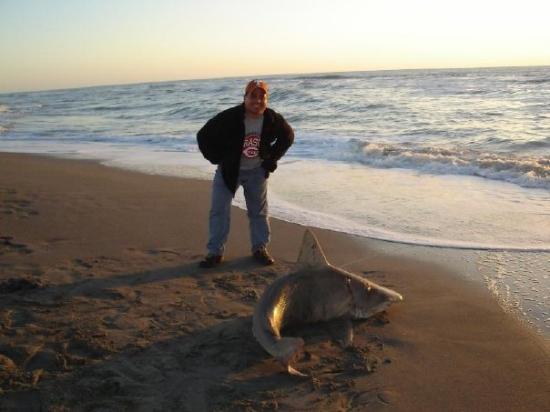 Sarasota, Florida - Caught a shark by Sharky's