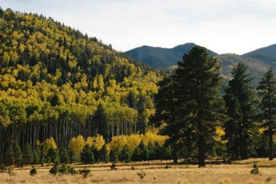 Lockett Meadow Flagstaff AZ
