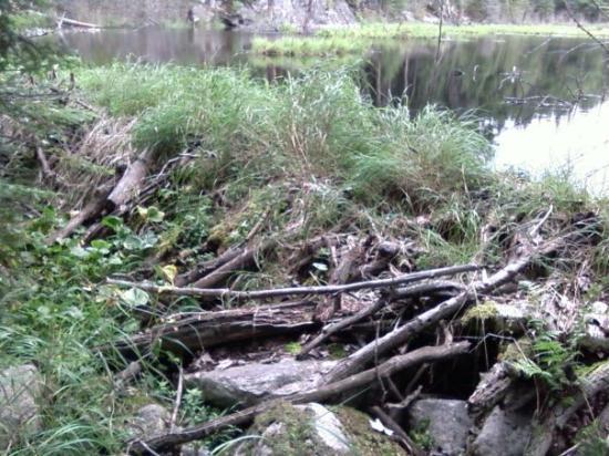 Ely, MN: Beaver Dam