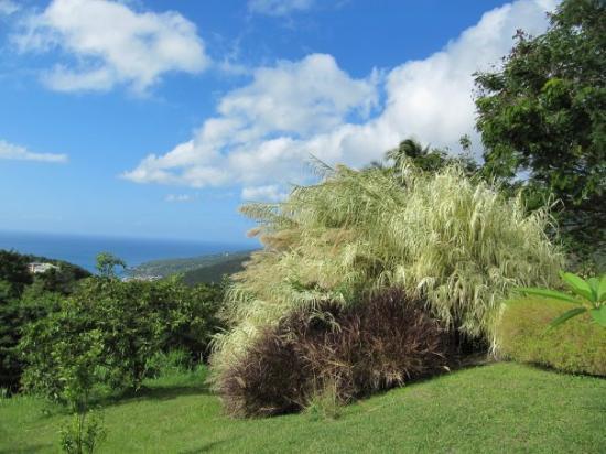 Pointe-a-Pitre, Guadeloupe: Auf Guadeloupe vom Kaffe museum