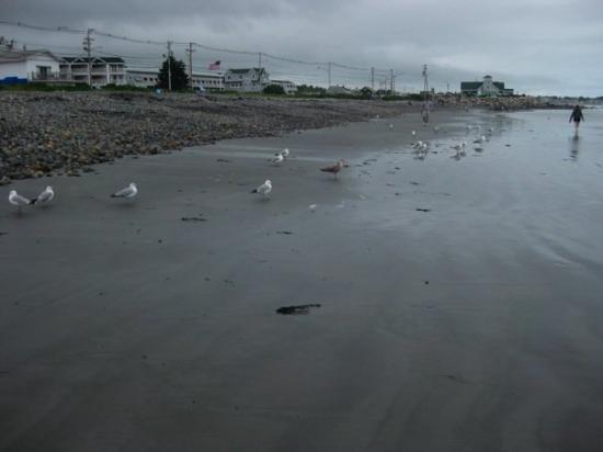 Long Sands Beach: Mine, mine, mine