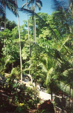 Ocho Rios, Jamaica: .................Near Dunn Falls.......................
