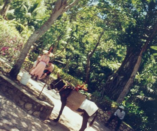 Ocho Rios, Jamaica: ...............................................................