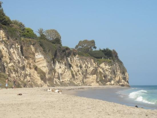 Point Dume State Beach and Preserve: Dog days.