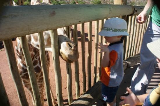 Cheyenne Mountain Zoo: Riley feeding a giraffe.