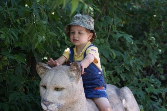 Cheyenne Mountain Zoo: Go kitty, Go!