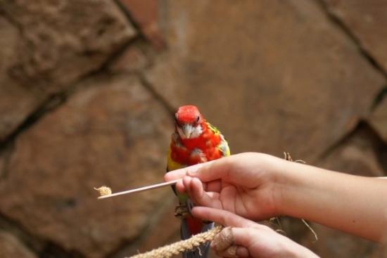 Cheyenne Mountain Zoo: Birdseed anyone?