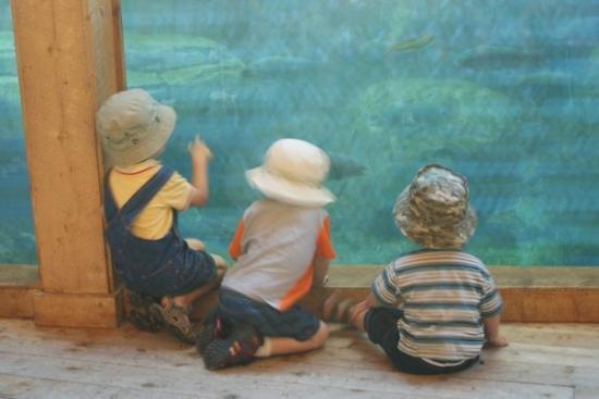 Cheyenne Mountain Zoo: What do you see boys?
