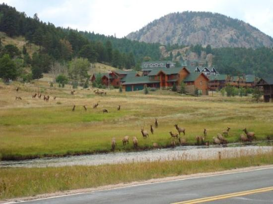 This is the same herd we almost ran over.  Once we came down the mountain into Estes Park they h