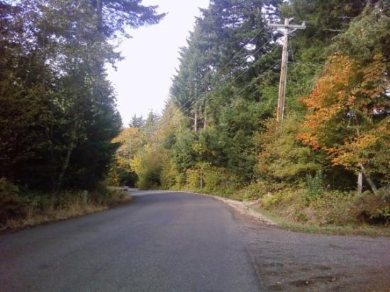 Portland, OR: A pic on S Day Hill Rd.. walking to town -tons of trees/curves/hills