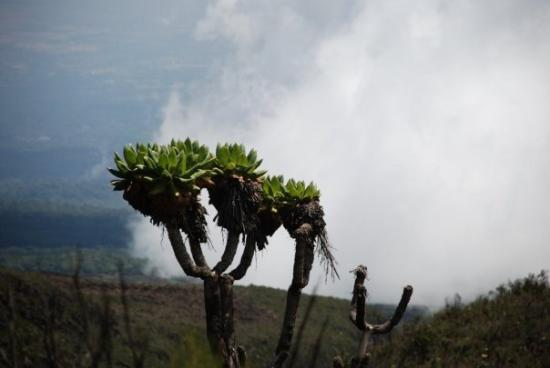 Kilimanjaro National Park, Tanzania: As we go up, the mist settles in and the temperature drops rapidly