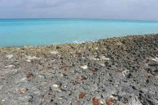 Melia Las Antillas: banc de corail