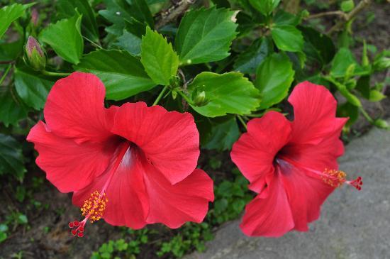 Palm Garden Beach Resort & Spa: beautiful grounds