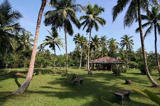 Florie Villa: le palme del giardino
