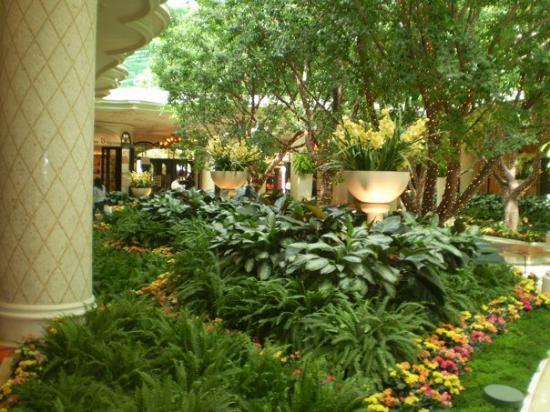 Encore At Wynn  Las Vegas: Lobby Foriest