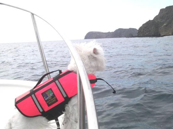 Channel Islands National Park, CA: Sweetea got her sea legs