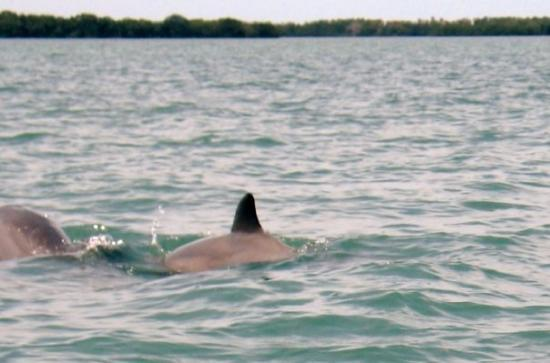 Dunedin, FL: Saw some dolphins...they were surrounding our boat.