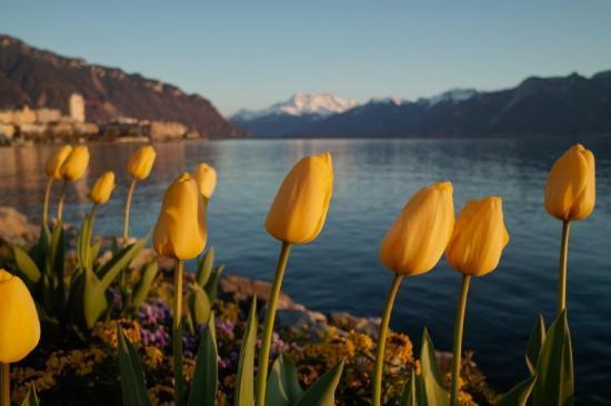 Bilde fra Montreux