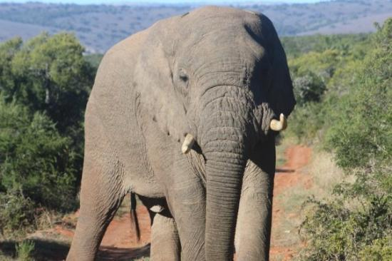 Bilde fra Shamwari Game Reserve