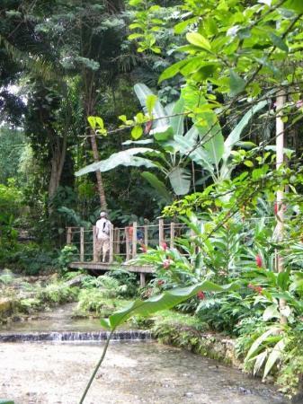 Bilde fra Coyaba River Garden and Museum
