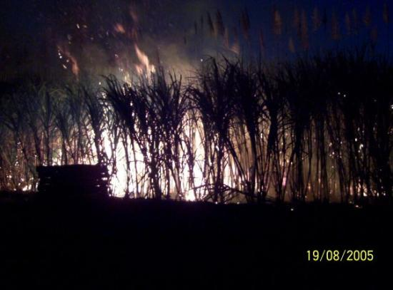 The last burning of the Sugar Cane within the city limits of Bundaberg, Queensland. Australia