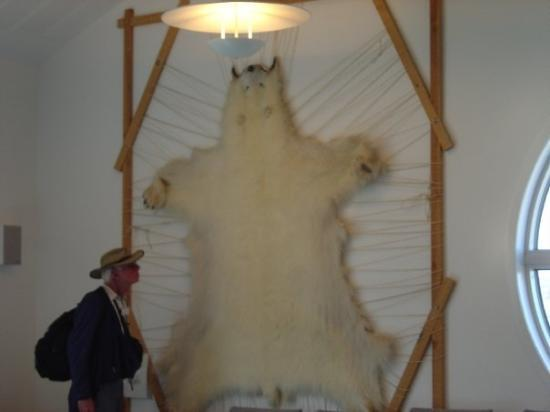 A Polar Bear skin in our hotel in Kulusuk, Greenland.