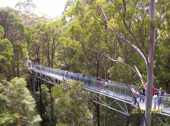 Apollo Bay, Australia: The Tree Top Walk, Otway Range, Victoria, Australia