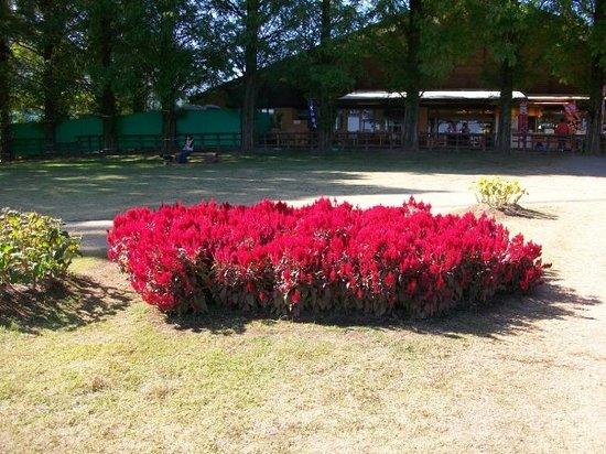 Kanoya Rose Garden