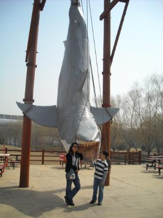 Beijing Aquarium (Beijing Haiyangguan): look at the fish, so big...