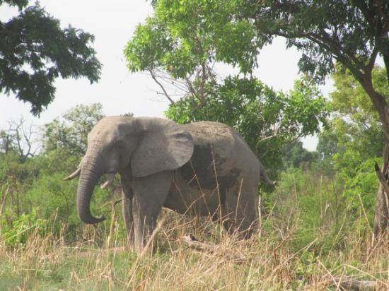 Pendjari National Park, Benin: IMG_0720