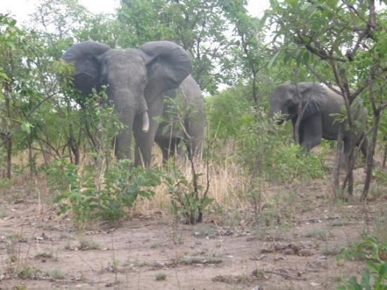 Pendjari National Park, Benin: Up close and personal
