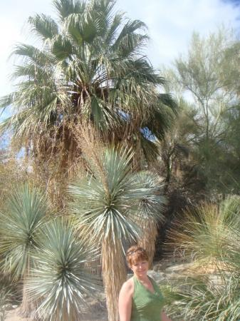 Palm Springs, CA: here it is - me and the palm trees