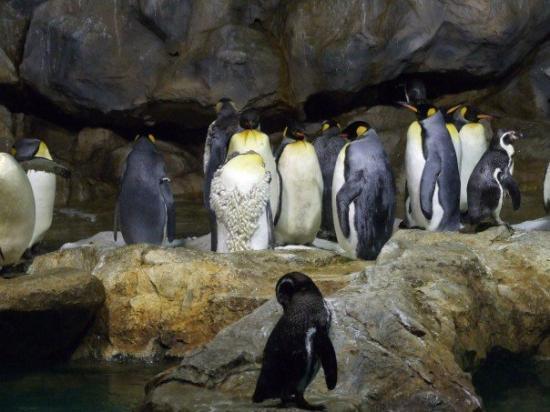 Jurong Fuglepark: Penguins - Jurong Bird Park, Singapore