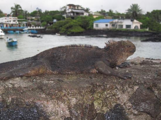 Bilde fra Puerto Ayora