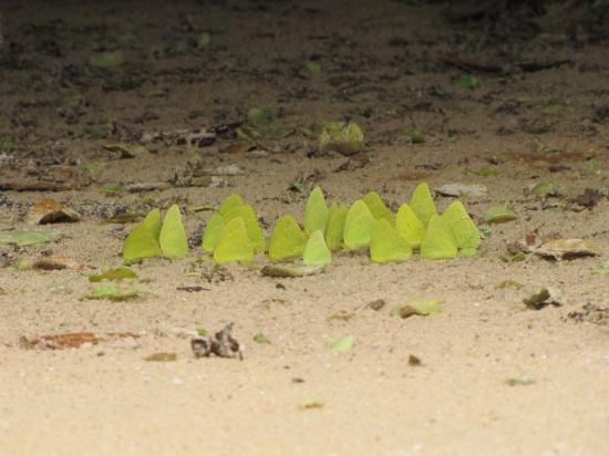 Puerto Ayora, Ecuador: oops my bad.... buterflies on beach