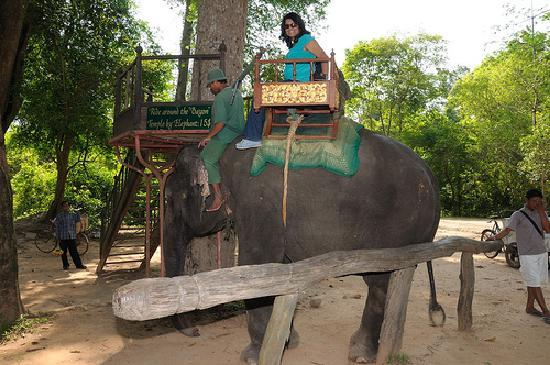 FCC Angkor: Bumpy rides but great view - loved the tall trees!