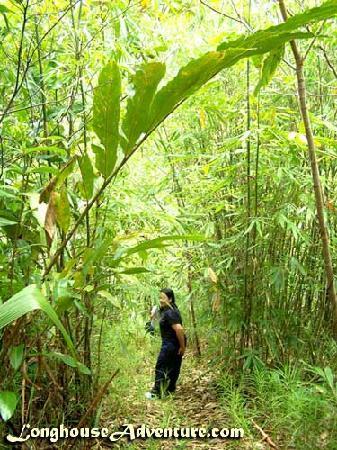 Annah Rais Longhouse Adventure: Jungle trekking