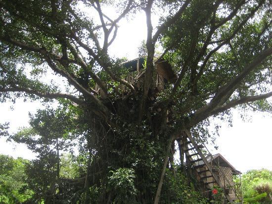 Tanna Tree Top Lodge: The Treehouse