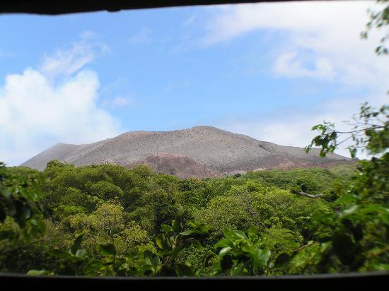 Tanna Tree Top Lodge: View from Treehouse window