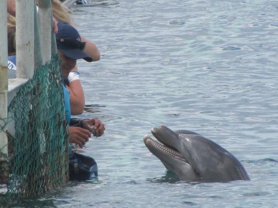 Chankanaab Beach Adventure Park: dolphins