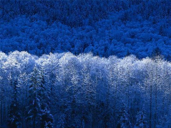 Kristiania Leading Nature & Wellness Resort: bosco imbiancato