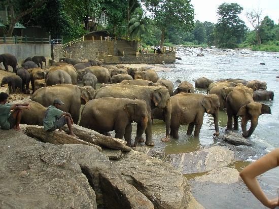 Club Bentota: elephant orphanage
